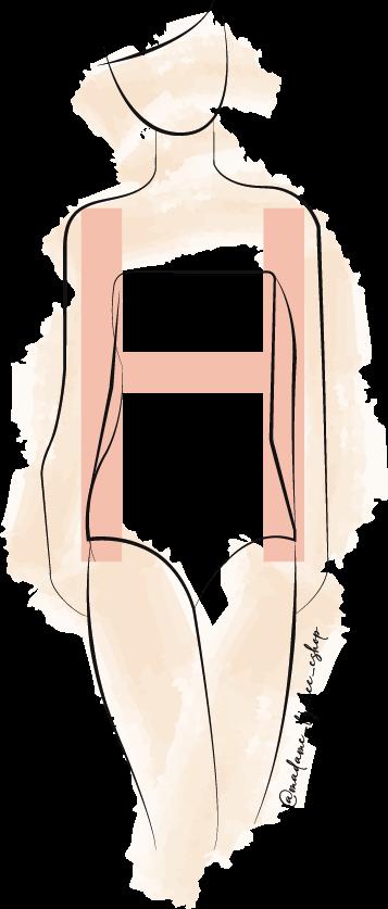 morphologie H